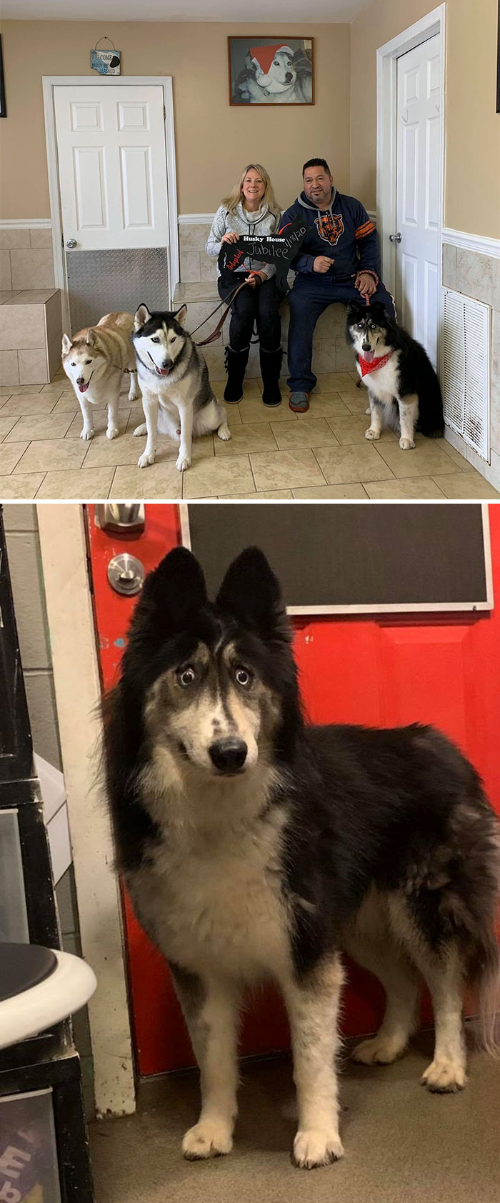 adopted pets 300 5e2f01c7c7a78 700