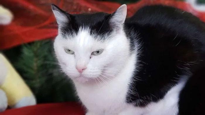 worst cat 20
