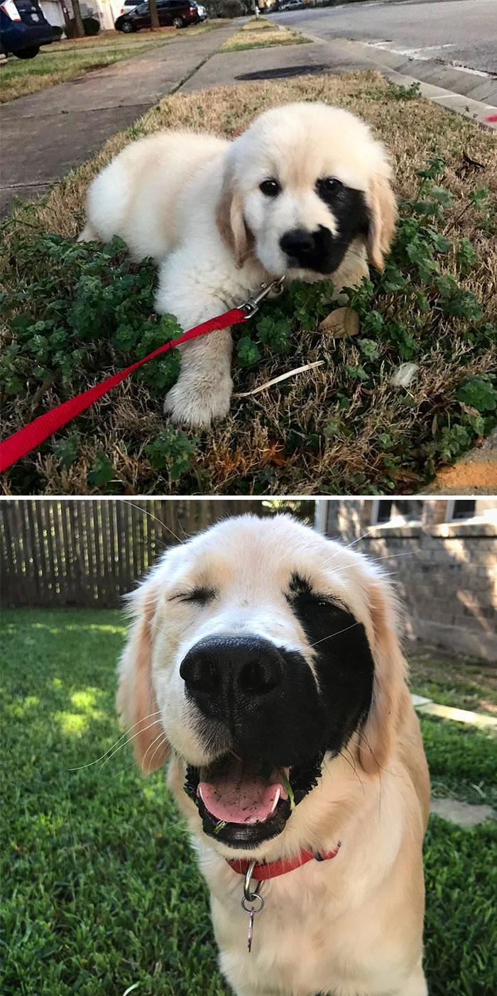 cute labrador retrievers 1 5a9e4b02a9ef9 700