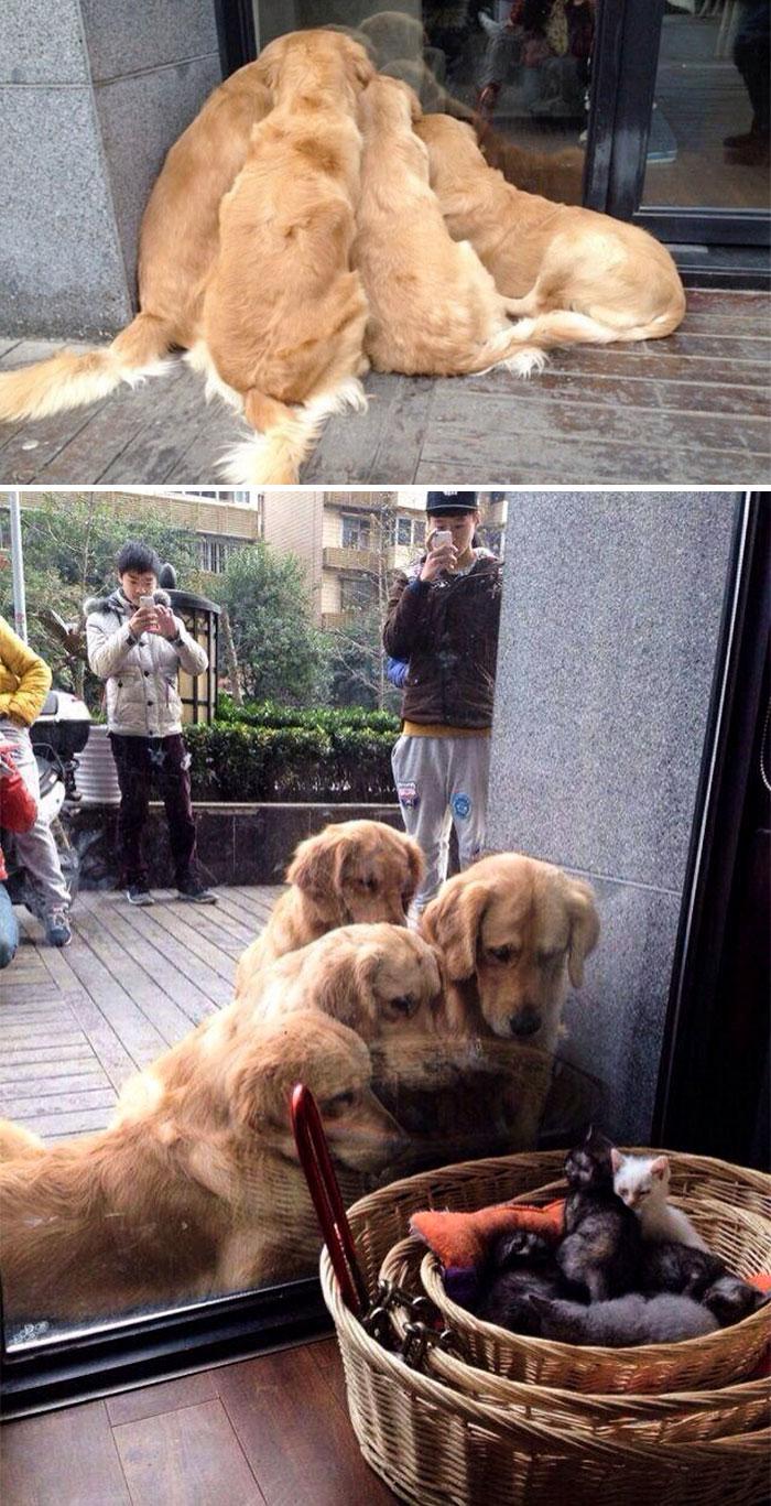 cute labrador retrievers 4 5a9e49fc9deb7 700