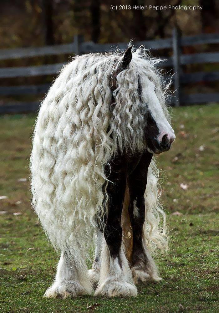20 animales que lucen un pelo mejor que el tuyo 5