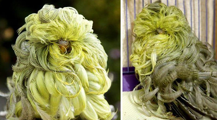 XX Animals That Need To Get A Haircut Real Bad 700