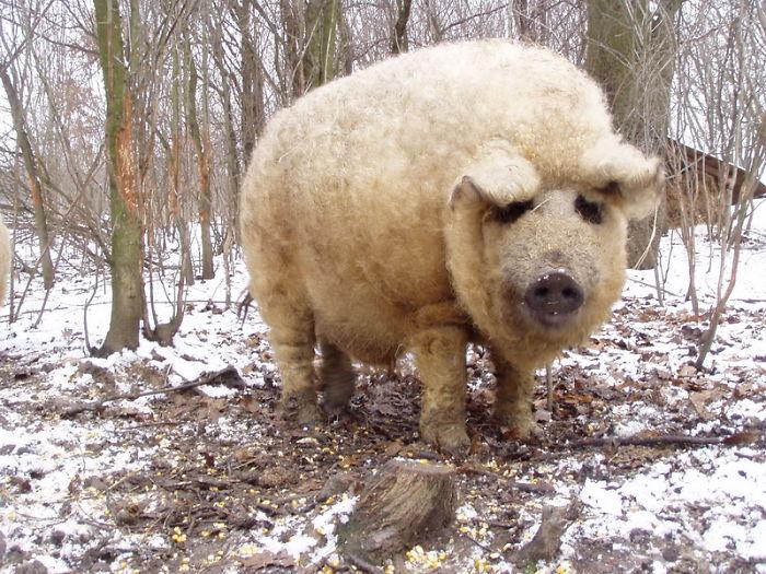 animales con un pelazo 16