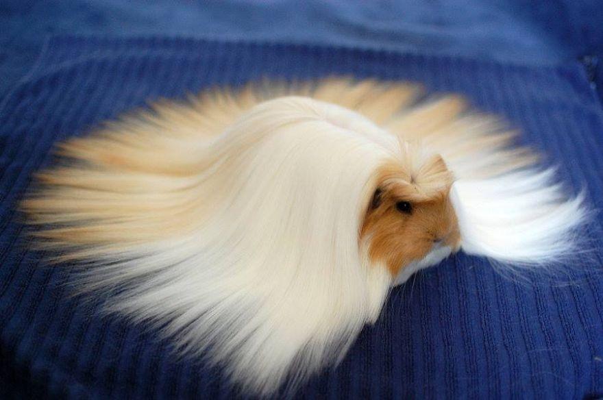 animales con un pelazo 2