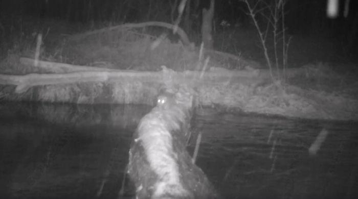 animals crossing log bridge 12 5e5cbc3dce127 700