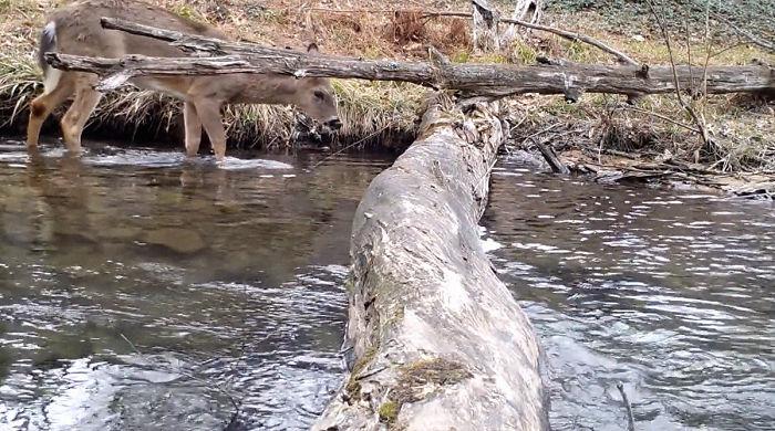 animals crossing log bridge 5e5cc241856a0 700