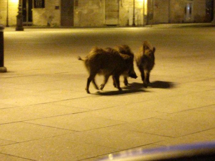animals in streets during coronavirus quarantine 1 5e70e3c8316a5 700