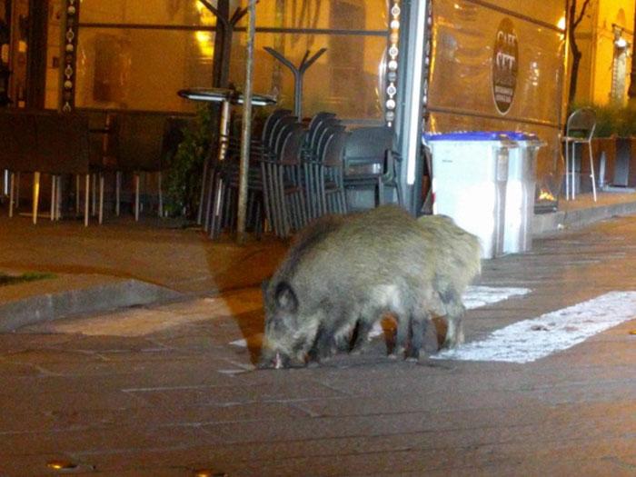 animals in streets during coronavirus quarantine 2 5e70e3cadf021 700