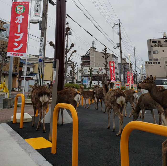 animals in streets during coronavirus quarantine 5e70e596e5b05 700