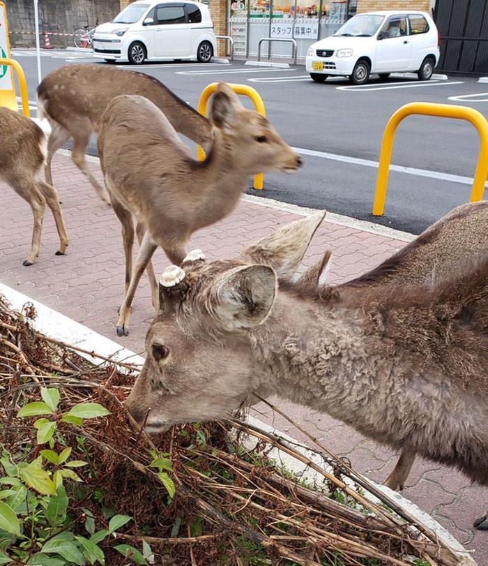 animals in streets during coronavirus quarantine 5e70e598da656 700