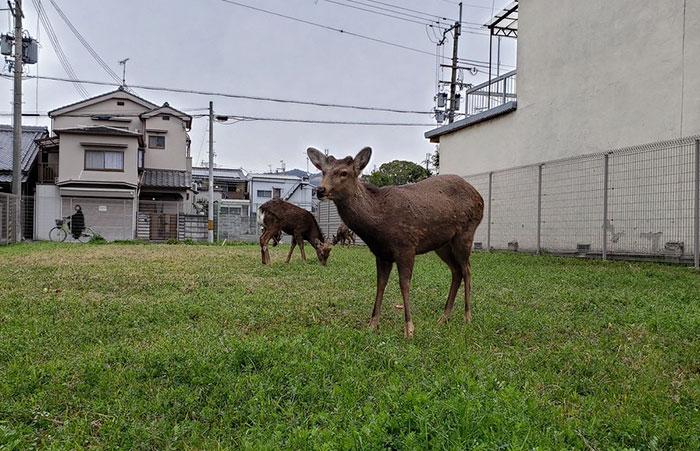 animals in streets during coronavirus quarantine 5e70e5b568723 700