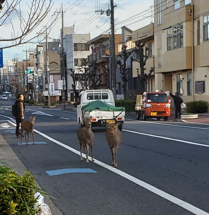 animals in streets during coronavirus quarantine 5e70e60a34524 700