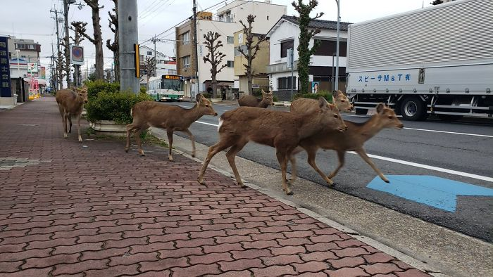 animals in streets during coronavirus quarantine 5e70e66743d7b 700