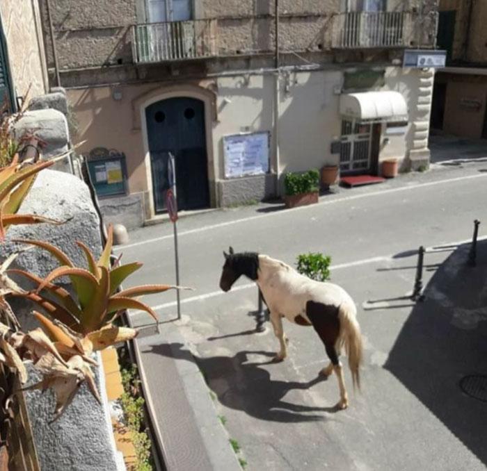 animals in streets during coronavirus quarantine 5e721c4eec1f6 700