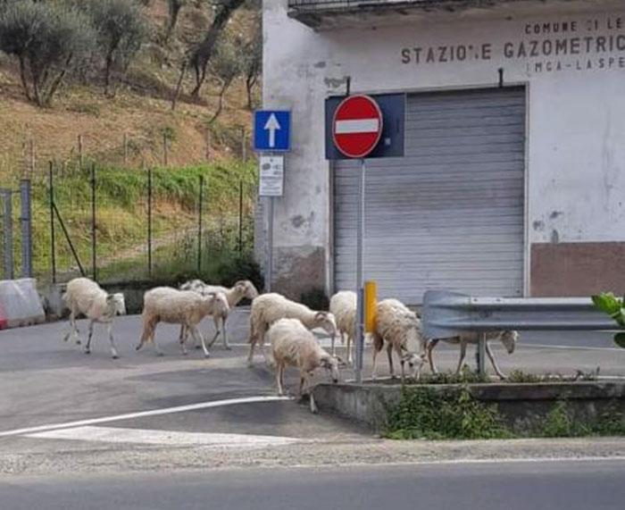 animals in streets during coronavirus quarantine 5e721d38e0f01 700