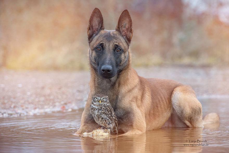 amistad buho perro tanja brandt 11