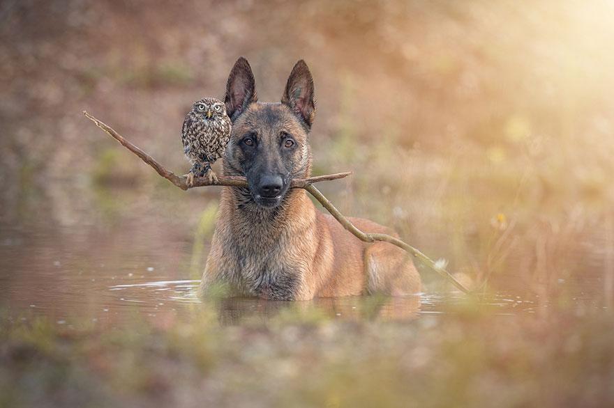 amistad buho perro tanja brandt 8