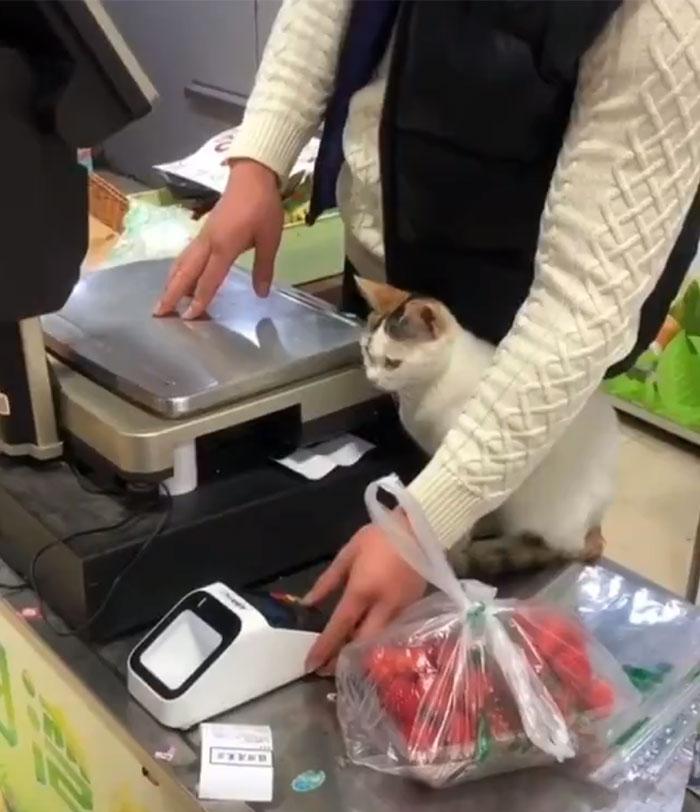 convenience store cats 5e8ec5b482f32 700