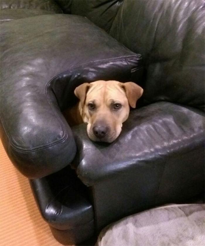 funny dogs not breaking rules bending 28 5922d291ebb04 700