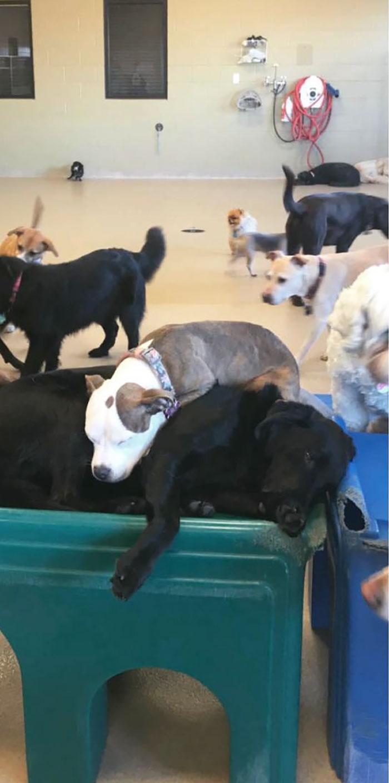puppy naps fluffy dog brianna day care brianna gottfried 5e8590f0786cb 700