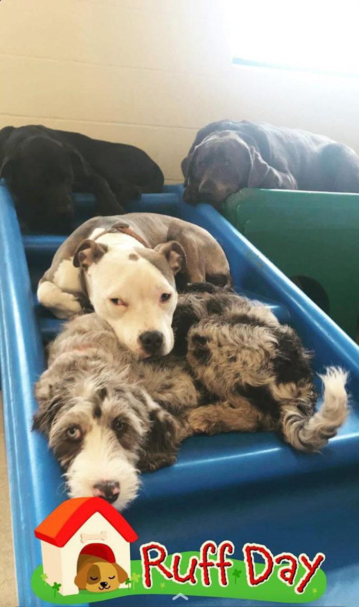 puppy naps fluffy dog brianna day care brianna gottfried 5e8590f28a158 700