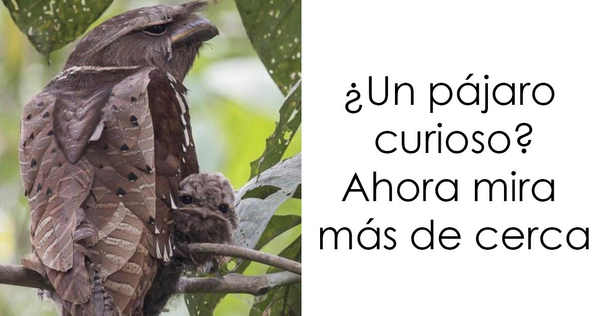 aves fb