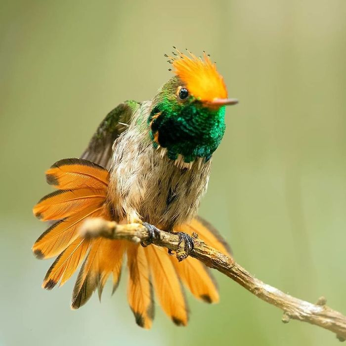 beautiful unique birds 29 5ebd33de2cc4a 700