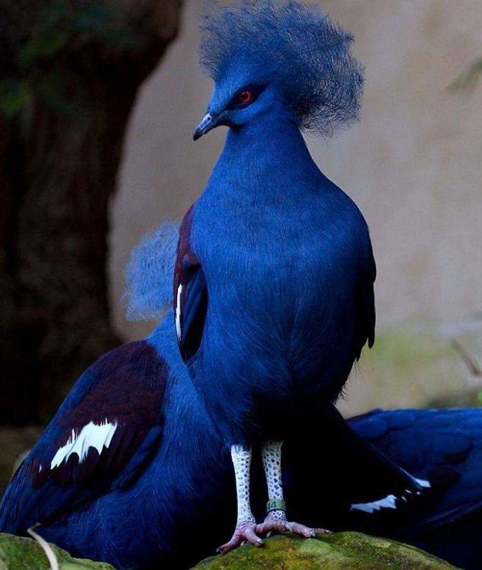 beautiful unique birds 47 5ebd456681692 700