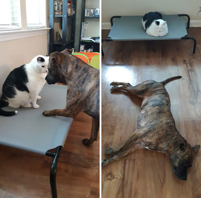 funny cats stealing dog beds 301 5eafd04cd112e 700