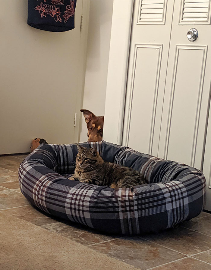 funny cats stealing dog beds 308 5eb10f2629b8b 700