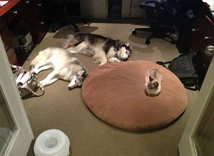 funny cats stealing dog beds 8 5eb5664aca46a 700
