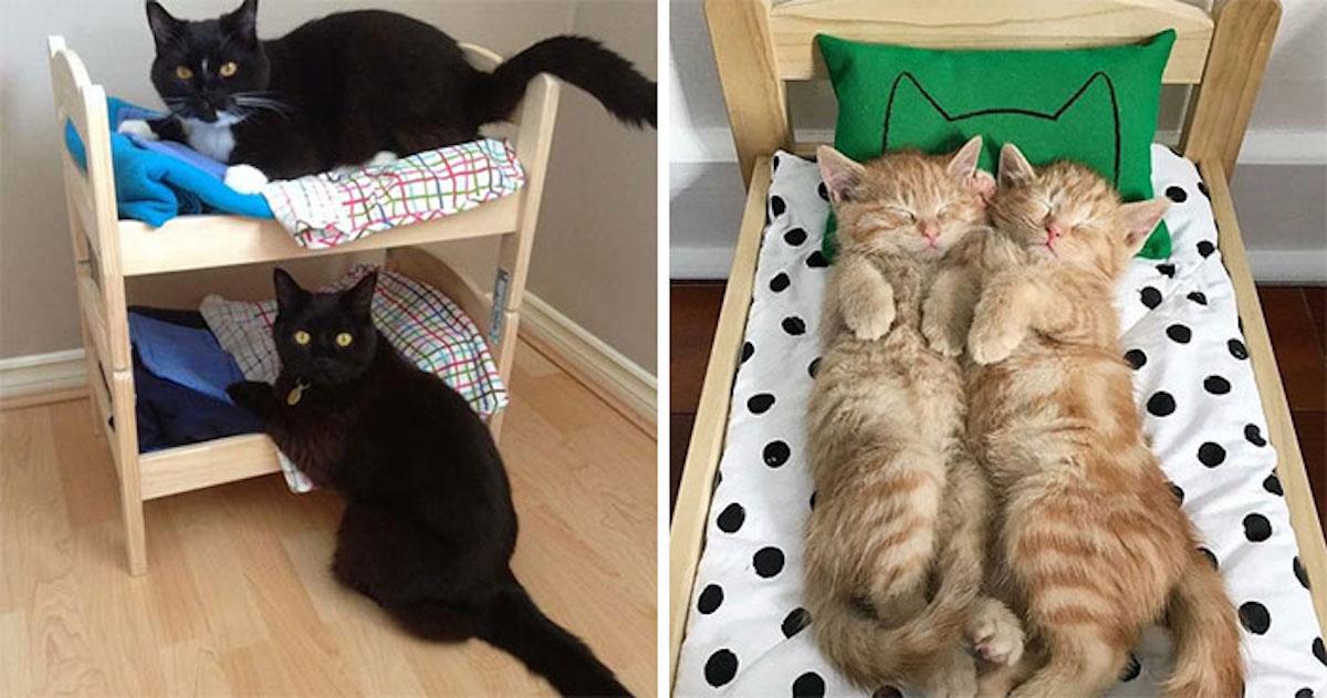 ikea camas gatos