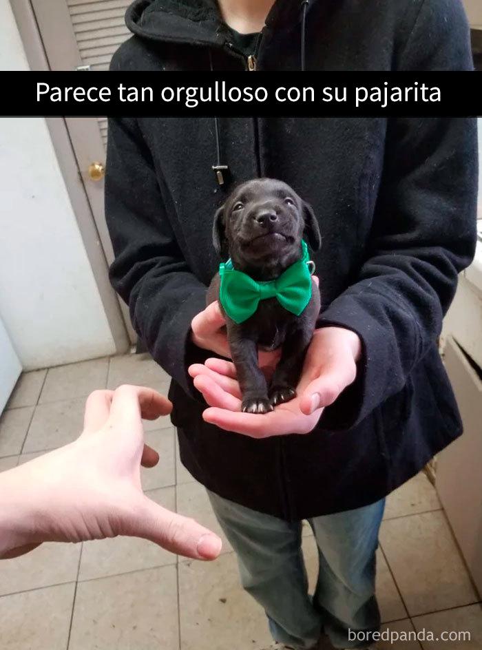 perrosnapchat7 15 5c7d3ff87879c 700