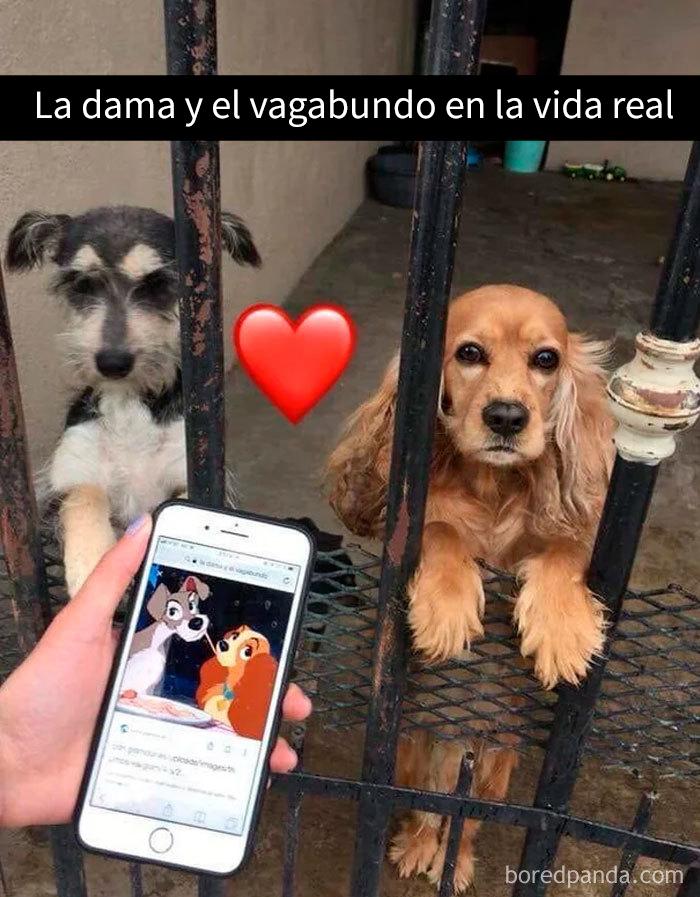 perrosnapchat7 17 5c7d3ffc9846e 700