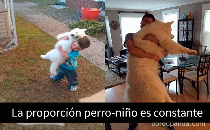 perrosnapchat7 4 5c7d3fe2806b0 700