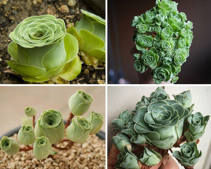unusual succulent plants 27 5ebe7ade5e175 700