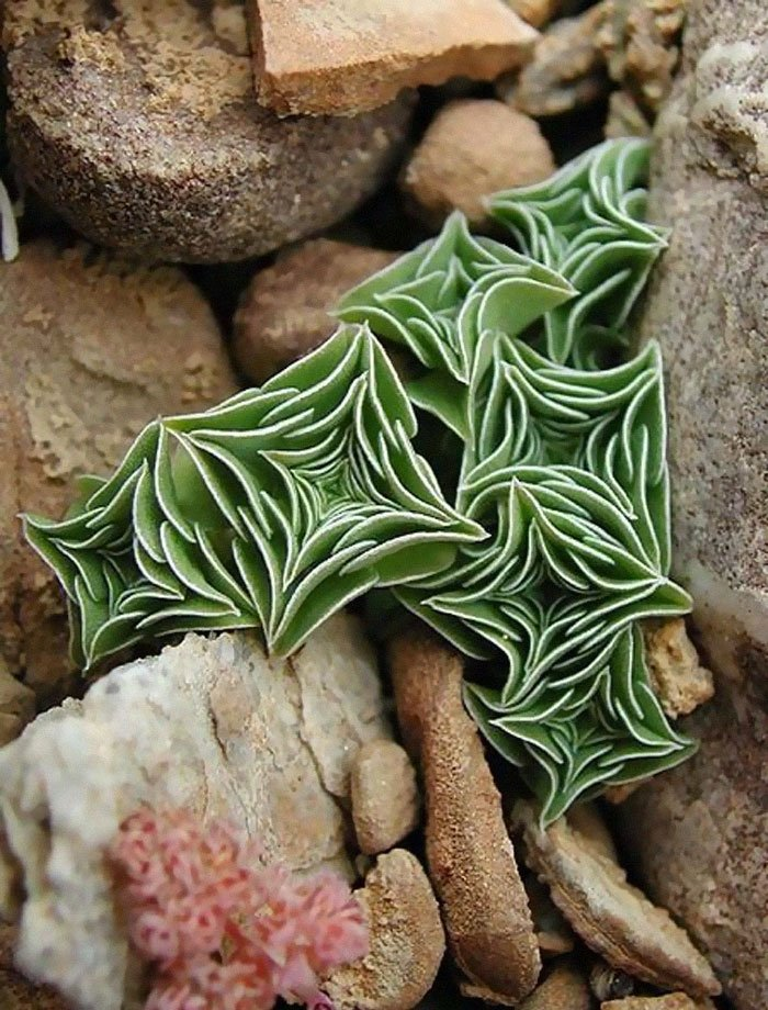 unusual succulent plants 5ebd362c7dea2 700