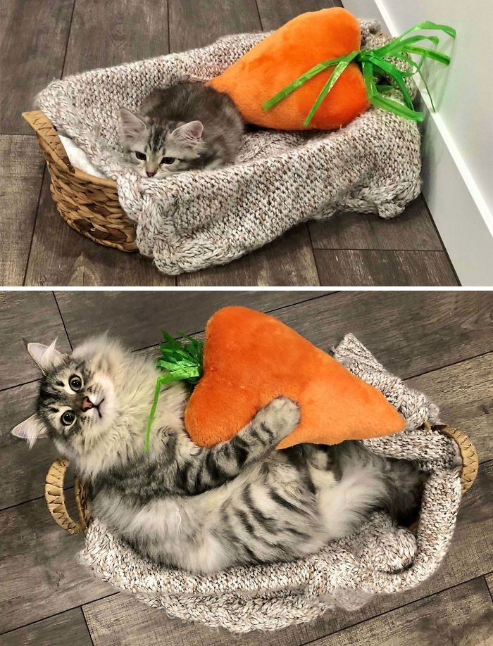 wholesome cats posts 5 5ecf6126c1f93 700