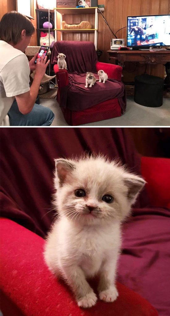 wholesome cats posts 5eb2893a02856 700