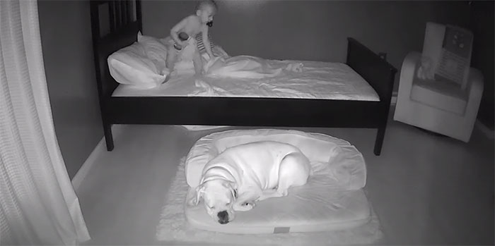 camera captures little boy sneaking out sleep with his dog 5f11a20b78cd4 700