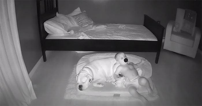 camera captures little boy sneaking out sleep with his dog 5f11a2108e330 700