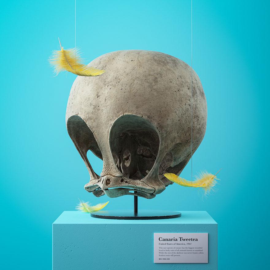 cartoon fossils skulls filip hodass 11 5e60ccce51cbb 880