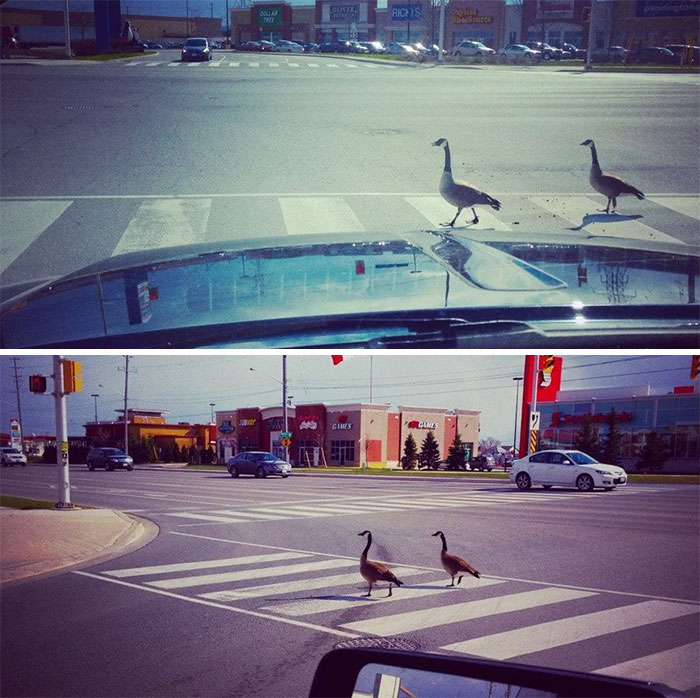 funny meanwhile in canada pictures 41 5d492b310a9c7 700