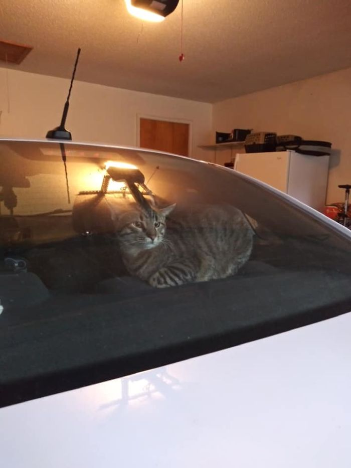 people find stranger cats in their houses 17 5efc7679c153f 700