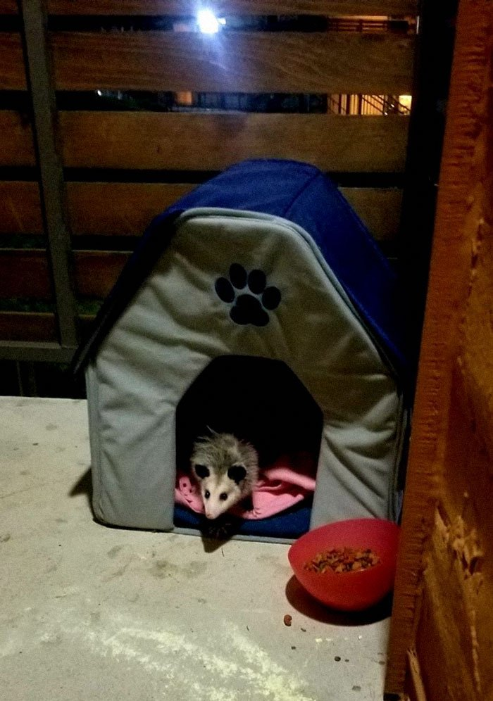 people find stranger cats in their houses 3 5efc76604c52a 700