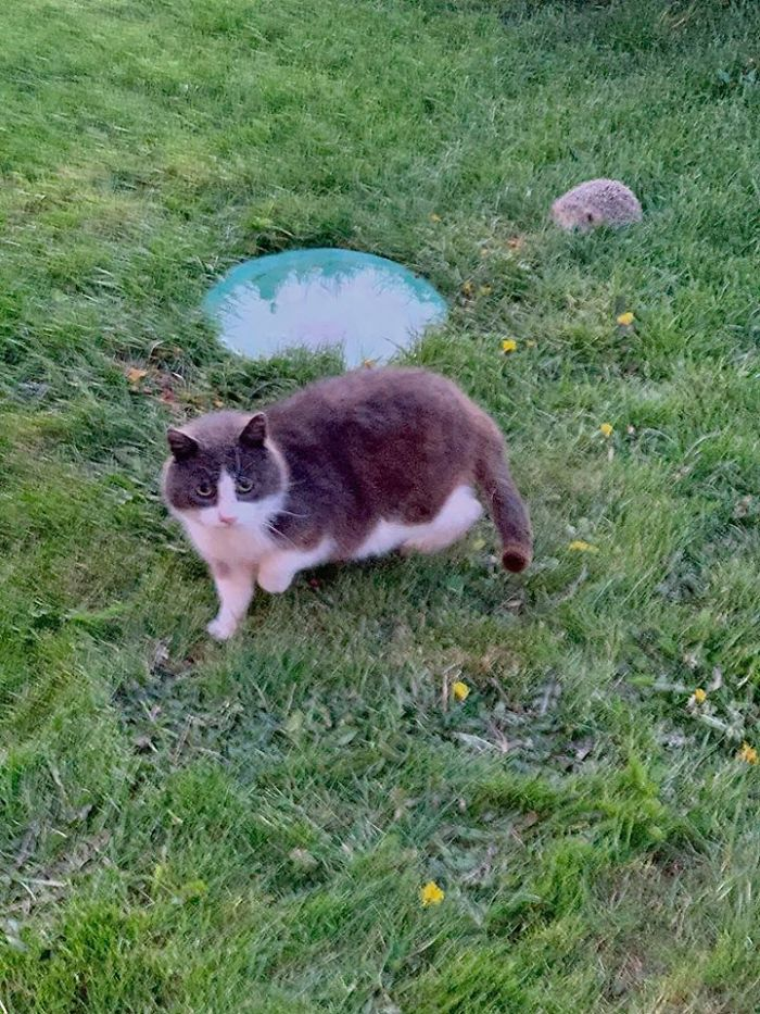 people find stranger cats in their houses 37 5efc769c61cd8 700