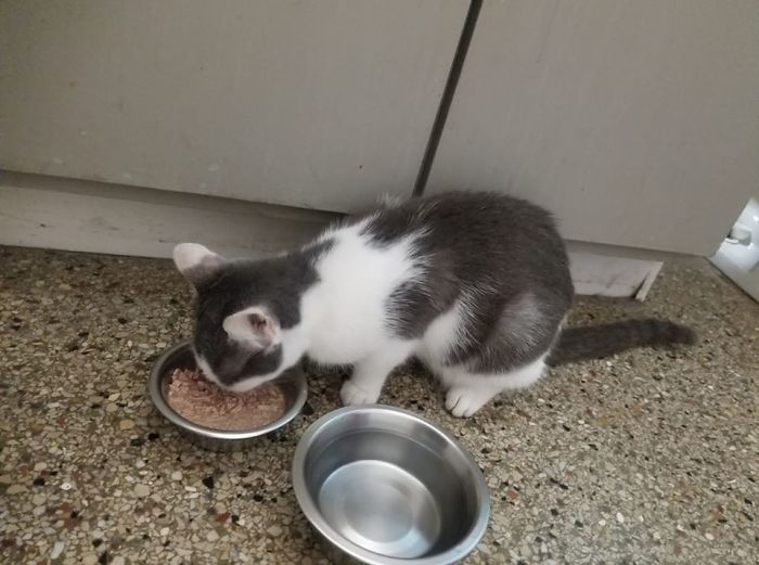 people find stranger cats in their houses 41 5efc76a325ea8 700