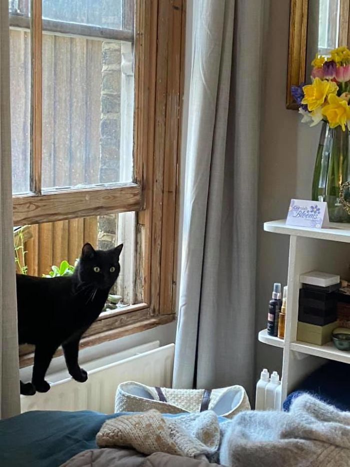 people find stranger cats in their houses 5efc8455d2cfc 700