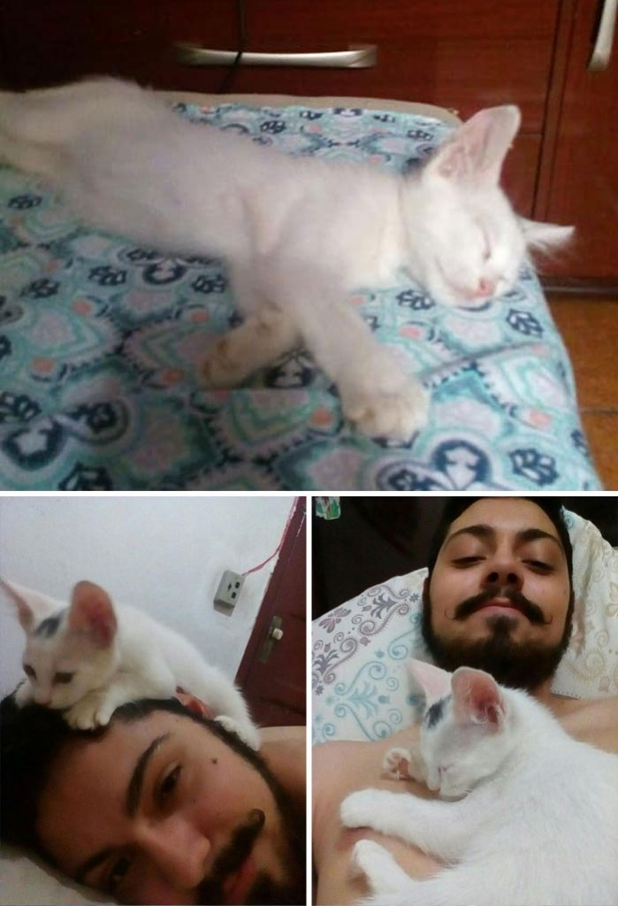 people find stranger cats in their houses 5efc84679449b 700
