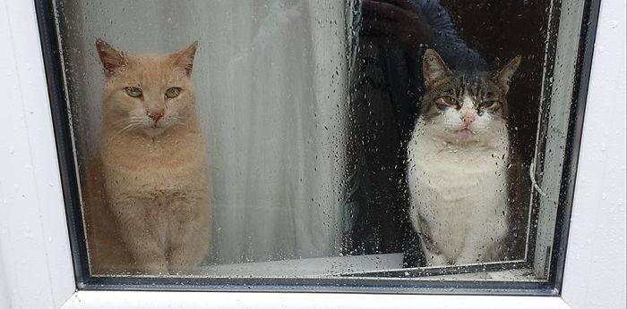 people find stranger cats in their houses 5efc84726f946 700